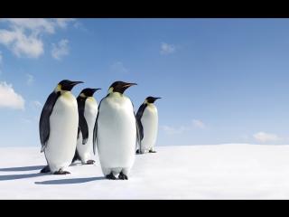 Пингвины в Vinpearl Amusement Park на о. Фукуок