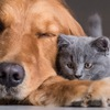 Animal Community