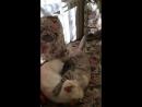Коты-борцы