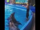 Дельфины и Шаманка