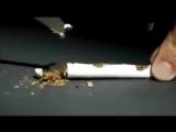 Смотреть всем, делайте выводы! Сигареты, из чего делают на самом деле. Получите шок, узнав правду