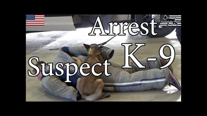 Police K-9 Unit Arrest Suspect Training Action