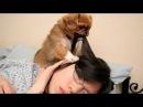 Sevimli Evcil Hayvanlar Sahiplerini Uyandırma ⏰ En İyi Alarm Saati! [Komik Evcil Hayvanlar]