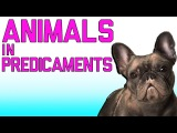 Animals In Predicaments: Funny Animal Fails