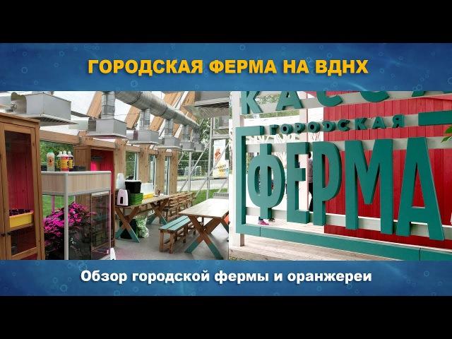 ГОРОДСКАЯ ФЕРМА НА ВДНХ - обзор малой оранжереи и территории