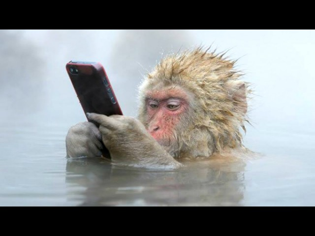 FUNNIEST MONKEYS Cute And Funny Monkey Videos Compilation BEST OF