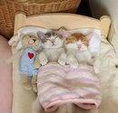 Канеле и Амели - это два очаровательных котёнка из Японии…