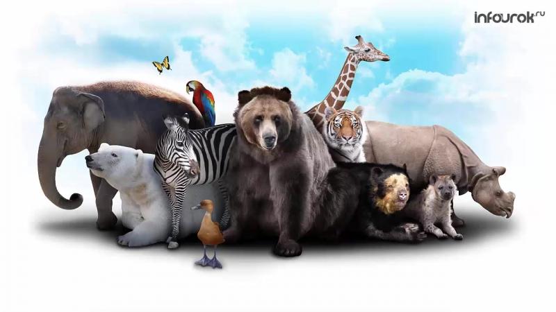 4. Естественный отбор и борьба за существование