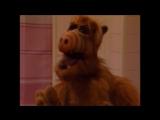 Alf Quote Season 1 Episode 25_Альф и Таракан