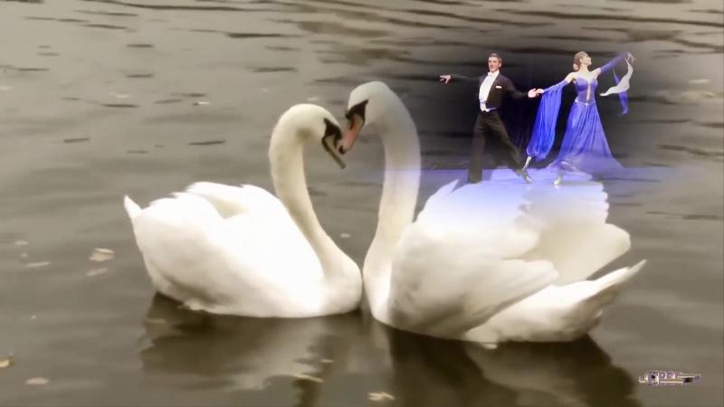 Евгений Дога - Вальс -Мой Ласковый И Нежный Зверь- Монтаж Светлана Левина