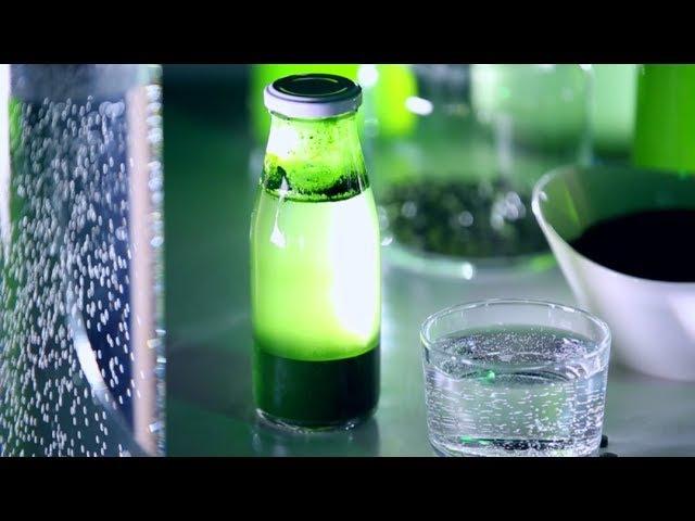 Чем полезна живая хлорелла