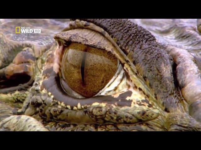 Дикая природа амазонки. Документальный фильм