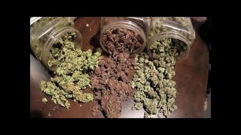 BBC National Geographic || Marijuana Drug History Channel Full Documentary