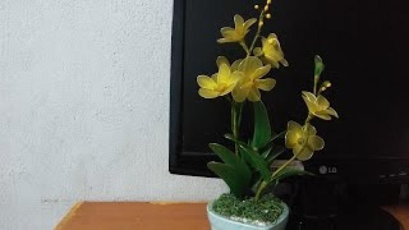 Hướng dẫn: LÀM HOA LAN TRANG TRÍ BÀN LÀM VIỆC_Orchids nylon flowers