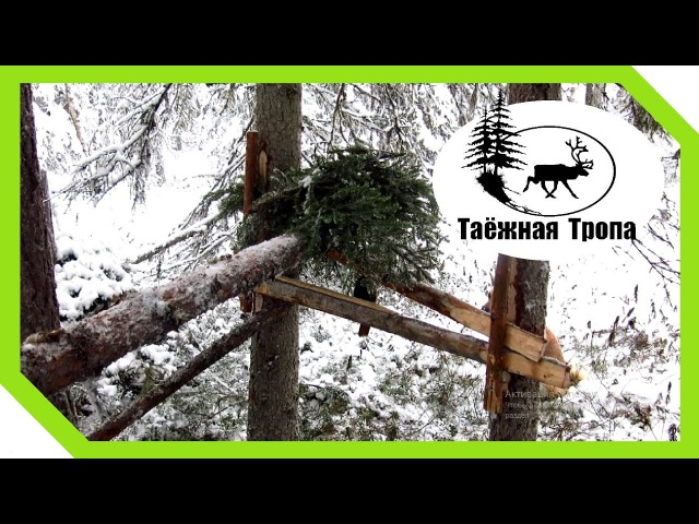 Кулёмка на куницу / соболя. Установка | Setting wooden marten trap