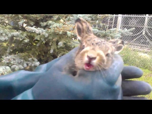 Cute Bunny Attack!