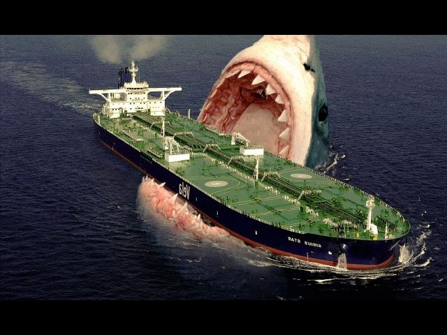 Megalodon o Maior Tubarão que já Existiu, Ou Ainda Existe !