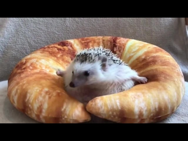 Stuck In Croissant - I Want To Break Free