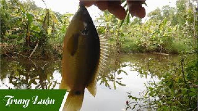Câu cá rô đồng trúng lớn, giật mỏi tay, không kịp móc mồi - Phần 1