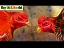 Cách khắc chế ♥ các thế đá đòn lối của gà chọi ♥ để giúp gà của bạn thắng trận