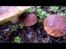 По грибы в карельский лес