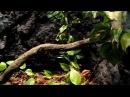 Муравьи листорезы в Рижском Зоопарке