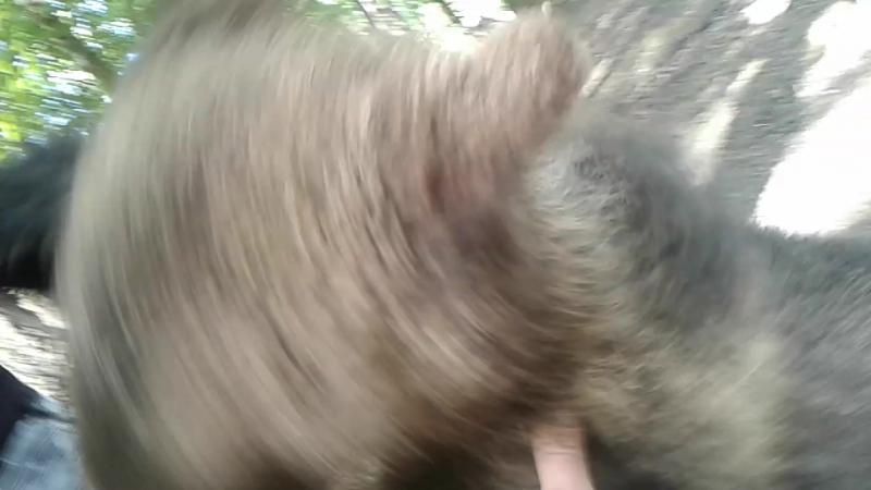 медвежонок в зоопарке