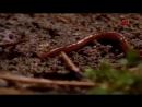 Удивительные обитатели сада - Дождевые черви