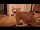 Кота обидели и он очень обиделся