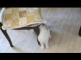 Аделина, и кошка Буся. (2)