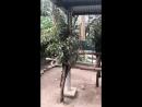 Спаривание вызова коала