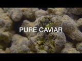 Pure Caviar Pre-Rolls