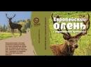 Европейский олень с воронежской пропиской