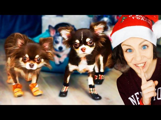 ЧТО ЕСЛИ КОШКЕ и СОБАКЕ надеть ОБУВЬ и НОСКИ Первая реакция собак и кошки Magic Family