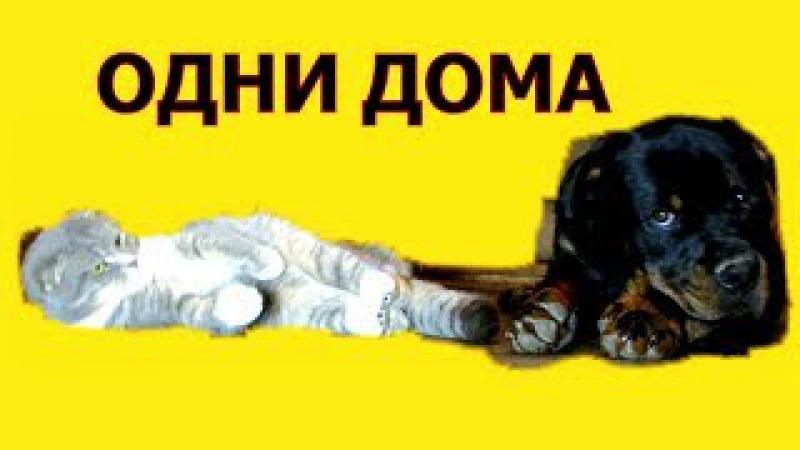 РОТВЕЙЛЕР ОДИН ДОМА дрессировка и воспитаник собаки