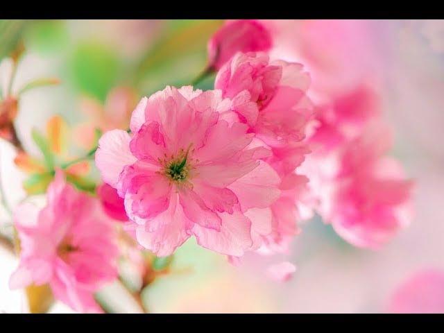 Необычное поздравление с праздником Весны!Любимым,друзьям и близким!