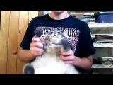 Death Metal Fat Cat Drum Cover