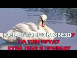 КАРАОКЕ - БЕЛЫЙ ЛЕБЕДЬ - ЛЕСОПОВАЛ (Karaoke)