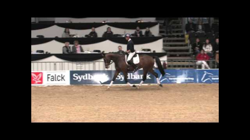 Danish Warmblood Young Horse Championship 2014 - Carl Hester testing Lady Gaga
