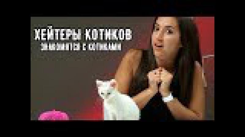 Хейтеры котиков знакомятся с котиками (RUS VO)