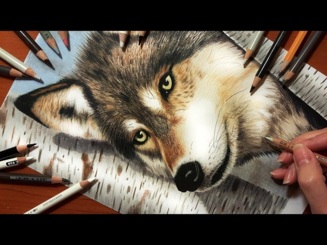 Speed Drawing of a Wolf in the Forest | Jasmina Susak