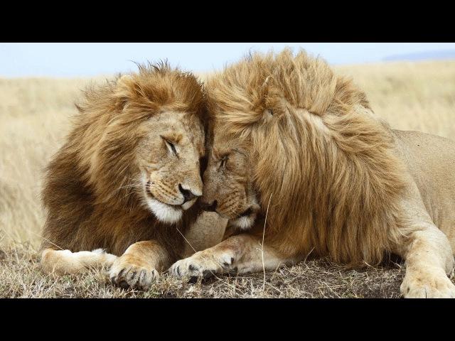 Секс - Битва за жизнь. Любовь ЖИВОТНЫХ в Дикой Природе. Документальный фильм Planet W...
