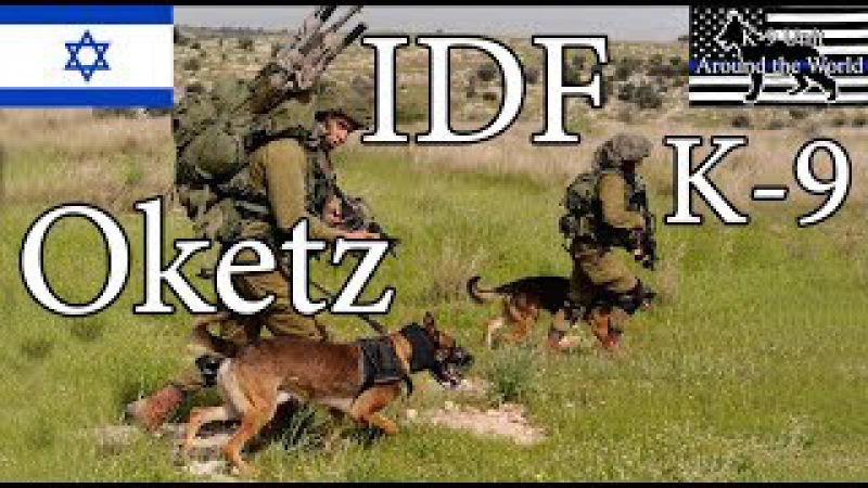 Israeli IDF SWAT K-9 Oketz Unit - Incredible Bomb Detection (explosives) Dogs, Search Terrorists