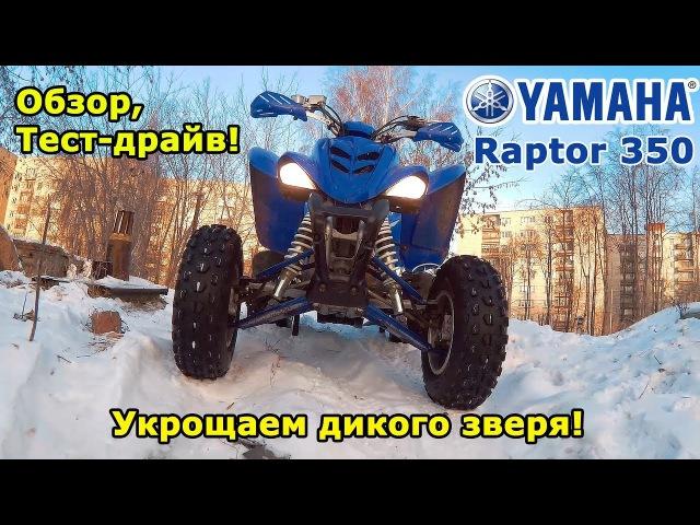Yamaha Raptor 350, обзор и тест-драйв квадроцикла. Укрощаем дикого зверя! Скийоринг.