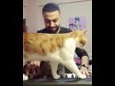 . He is a pianist cat and he doesnt like being disturbed while playing piano😒😂 Watch till end