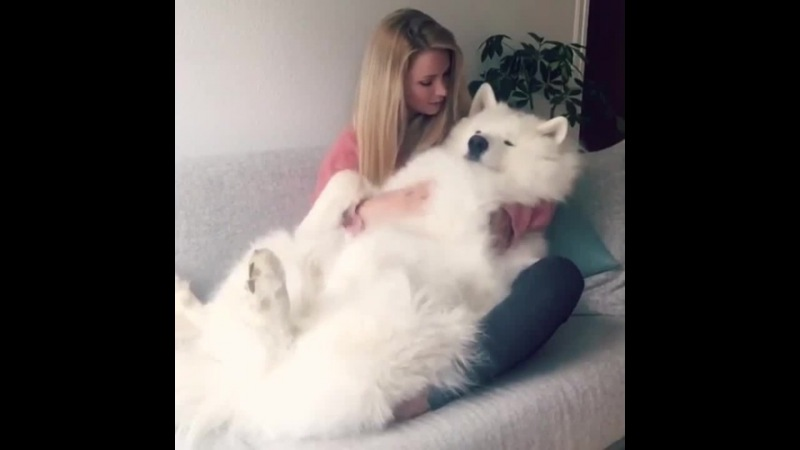 Very cute dog and his beautiful mistress · coub, коуб