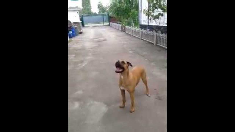 Джесси. Собака и воздушный шар. Jessie.