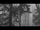 Vinterriket - Forstestr