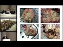 Нозокомиальный менингит в нейрохирургической клинике Савин И А 22 04 17