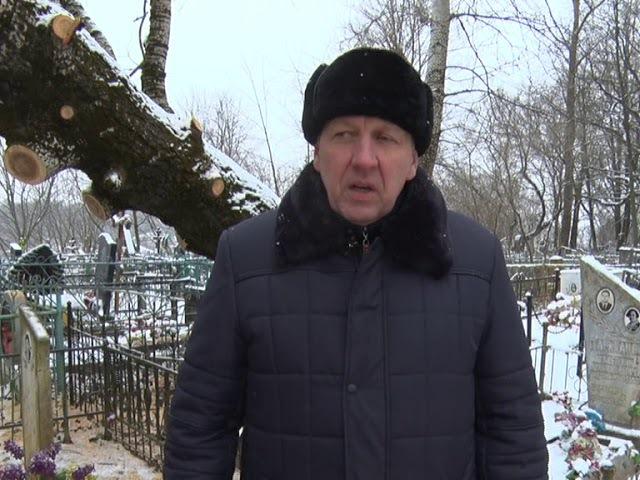 На Казанском кладбище упал многотонный тополь